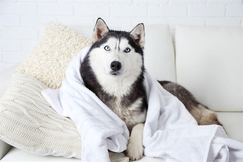 Jak oduczyć psa sikać w domu2